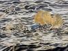 """Treiben"", Öl auf Leinwand, 80x130, 2020"